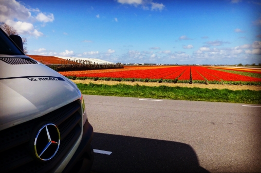 Our Colourful Bulb Fields tour of The Netherlands