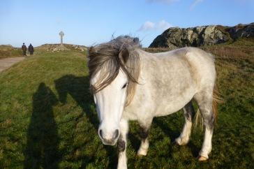 Llandwyn Island, Anglesey