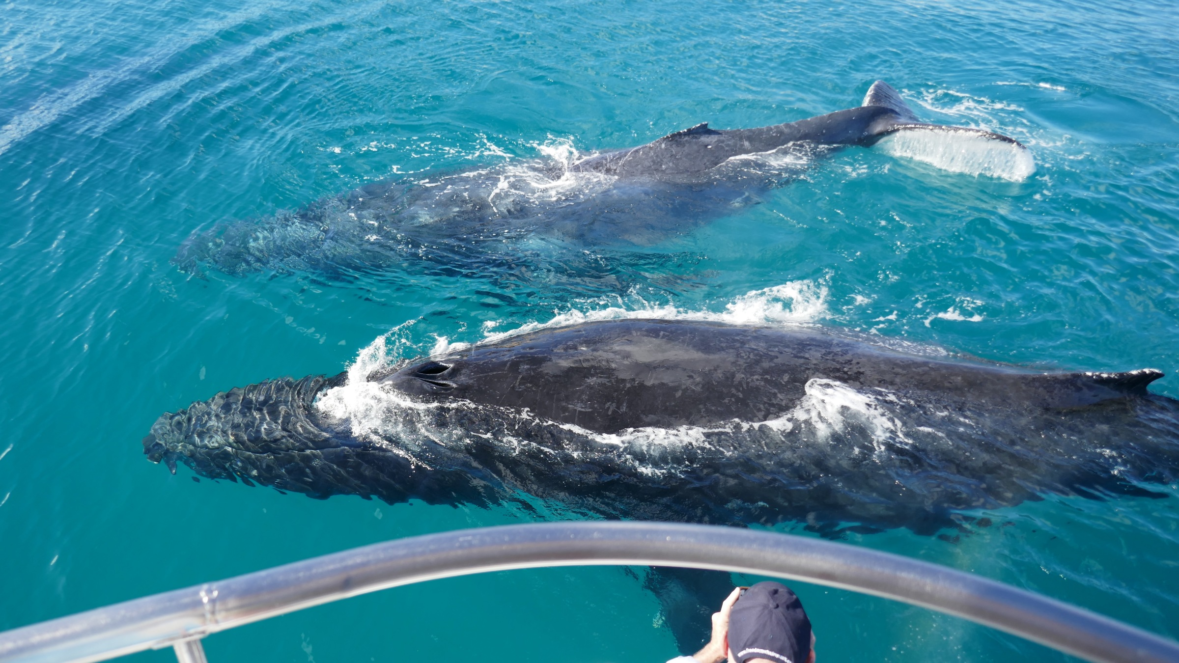 Whale Watching Hervey Bay