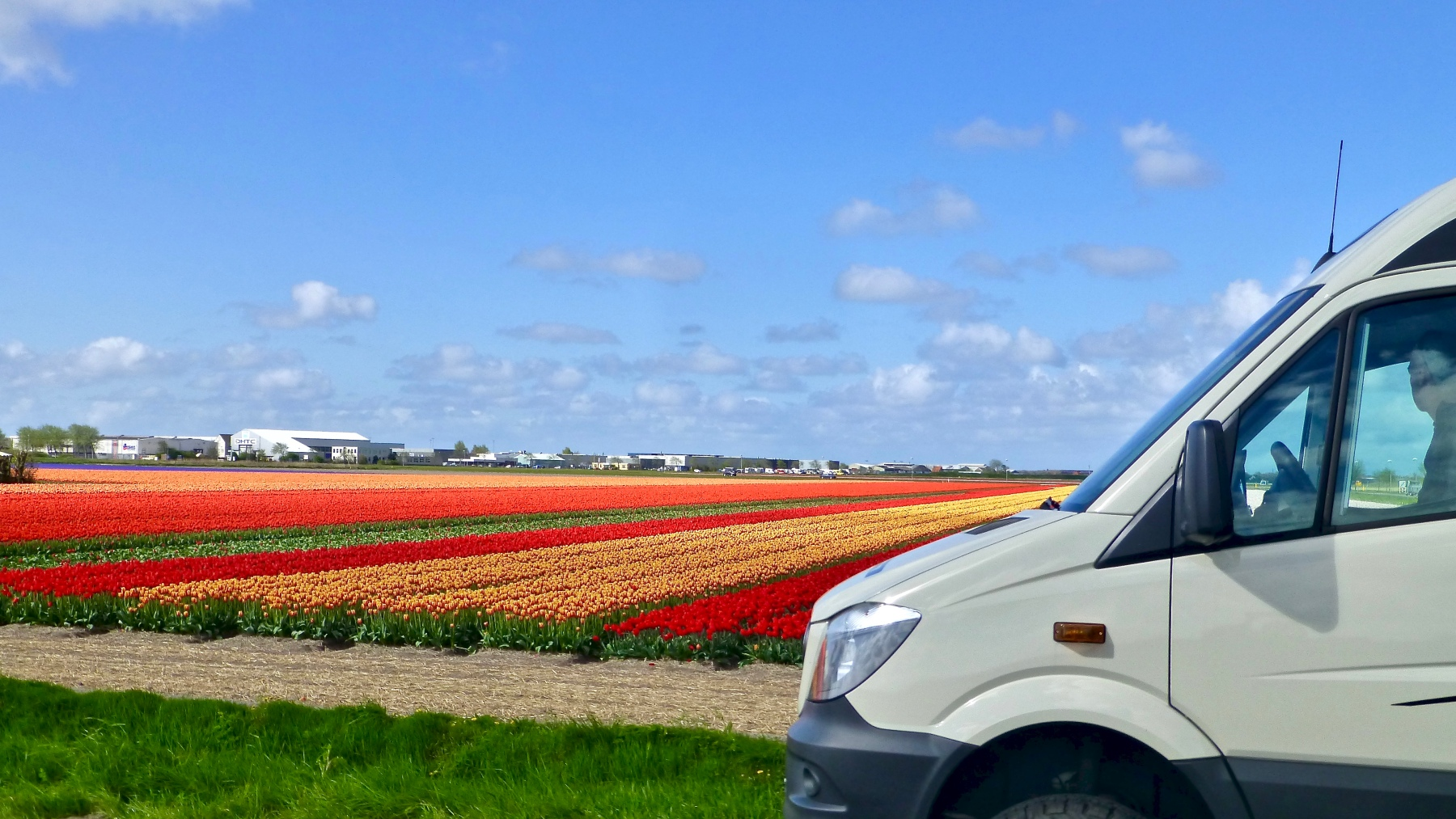 Dutch Bulb Fields